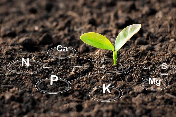 Harit sanjivani soil health special benefit