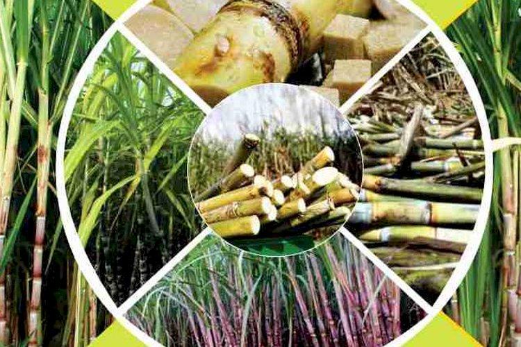 Benefits of RCM sure sugar in Hindi